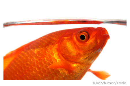 Super Sauerstoffmangel im Aquarium - erkennen und handeln &BH_56